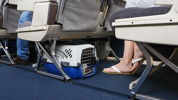 Consejos para viajar en avión con su gato